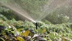 Автоматичні системи поливу городу
