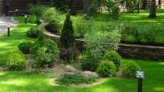 Декоративні кущі: додаткове прикраса саду