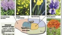 Як зробити клумбу безперервного цвітіння?