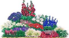 Як вибрати квіти для оформлення яскравих і незвичайних клумб?