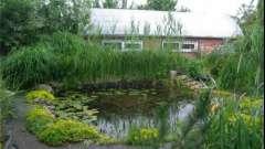 Як викопати і облаштувати ставок на дачній ділянці в сільському стилі?