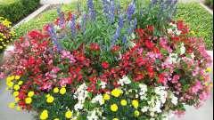 Правильне складання схем квітників