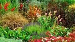 Створення клумби з садових квітів багаторічників