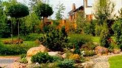 Способи використання різних рослин для ландшафтного дизайну