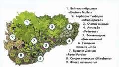 Типи квіткових рослин: які квіти вибрати для саду?