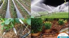 Види автоматичних систем для поливу рослин