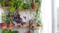 Зимовий сад в квартирі: оранжерея для душі